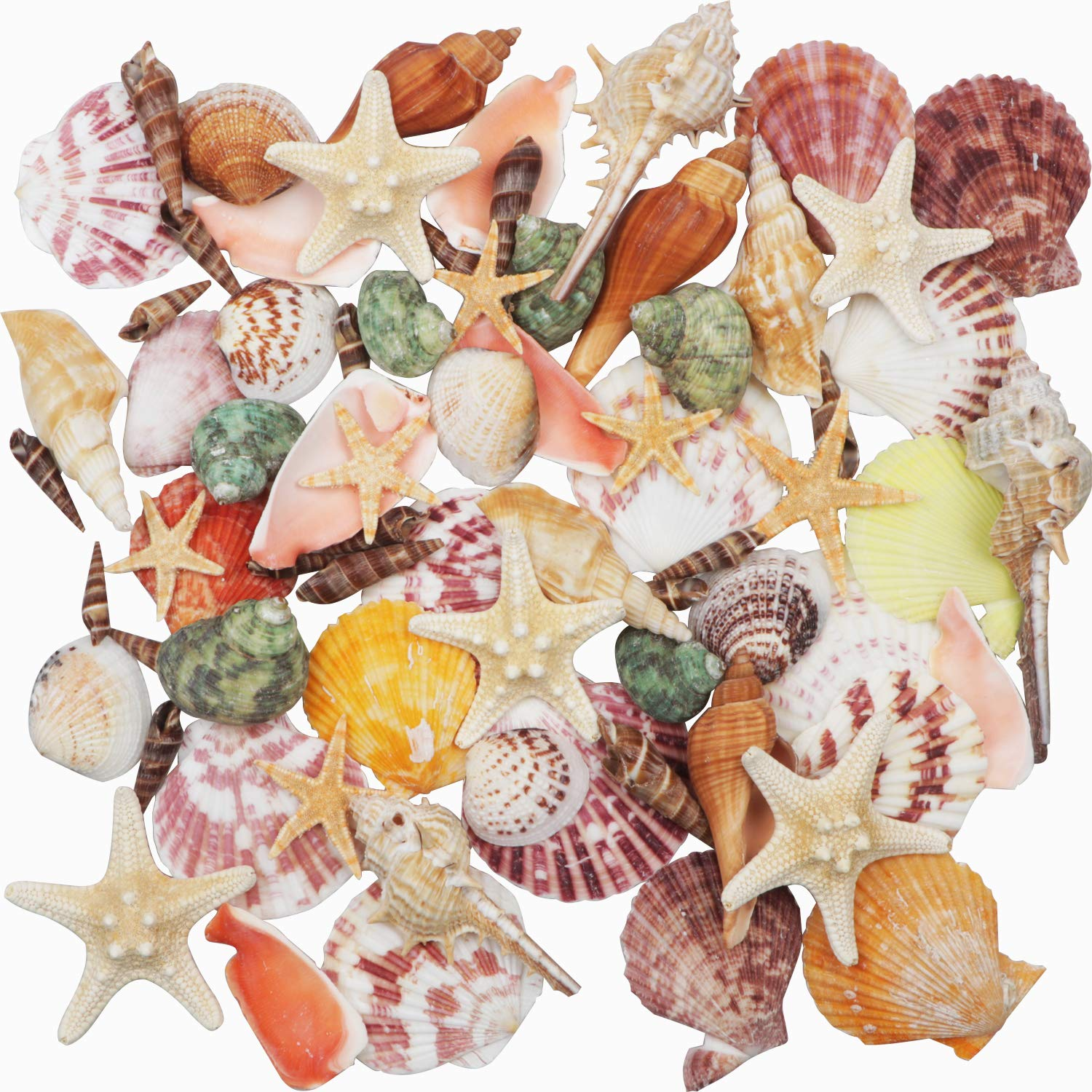 "Sea Shells Mixed Beach Seashells 9 Kinds 1.2""-3.5 ""Natural Seashells and 2 Kinds Starfish for Beach Theme Party Wedding Decorations DIY Crafts Home Decorations FishTank Supplies"