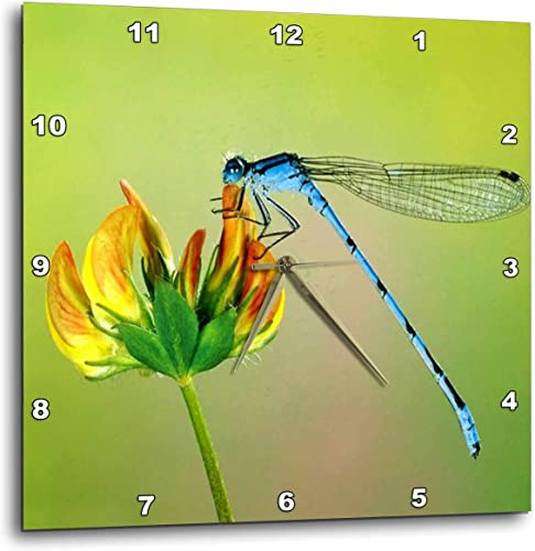 3dRose dpp_53238_1 Blue Dragonfly Wall Clock, 10 by 10-Inch