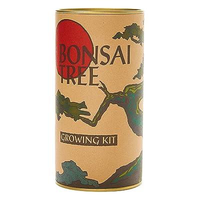 Bonsai Tree | Chinese Juniper | Seed Grow Kit | The Jonsteen Company : Garden & Outdoor