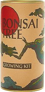 Bonsai Tree | Rocky Mountain Juniper | Seed Grow Kit | The Jonsteen Company