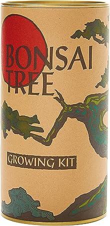 Supplied with Ceramic drip Tray Naruko Slow Release Care Set Bird Plum Cherry Sagaretia Flowering Bonsai Tree Broom Style