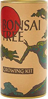 product image for Bonsai Tree | Japanese Maple | Seed Grow Kit | The Jonsteen Company