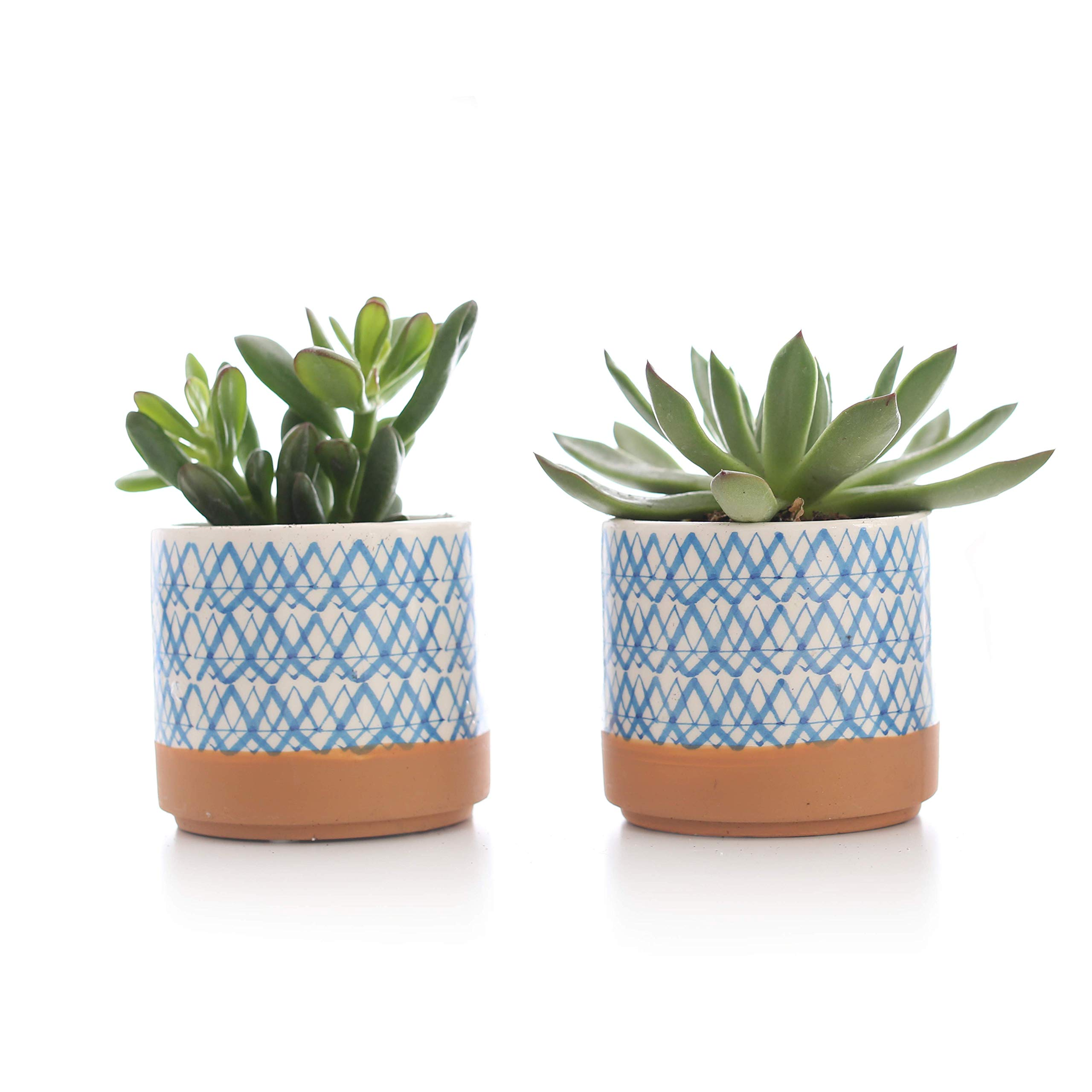 Plants by Post 3.5'' Blue Mini Live Succulent in White Patterned Ceramic Pot (Set of 2)