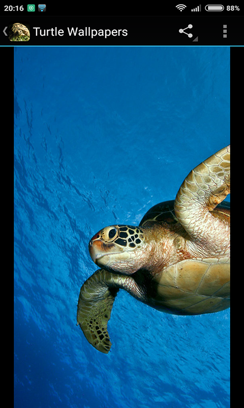 Amazoncom Turtle Wallpapers Appstore For Android