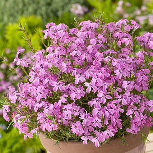 19 Gartenpflanzen Winterhart Immergrun Eigenschaften Bilder