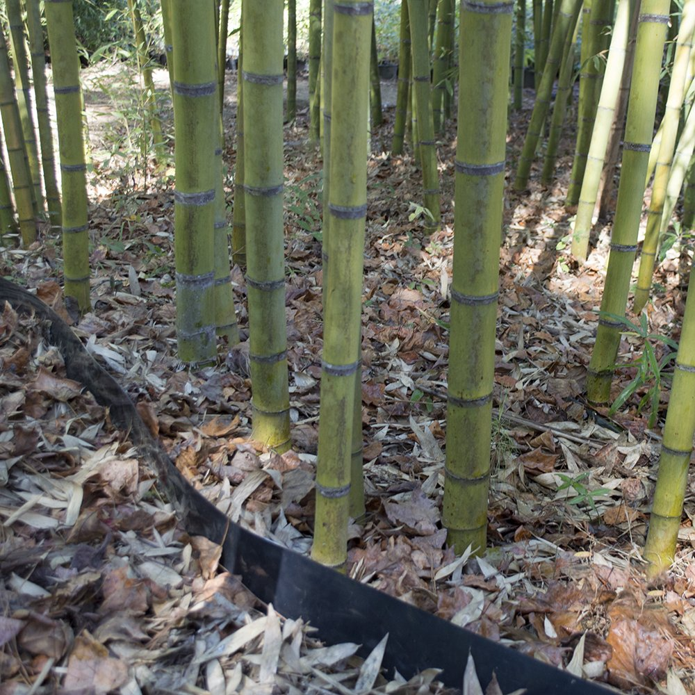 Bamboo Shield - 50 Foot Long X 30 Inch x 80mil Bamboo Root Barrier/Water Barrier by Bamboo Shield (Image #6)