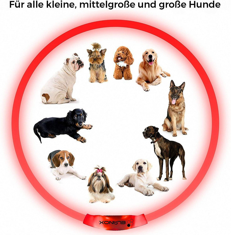 Personalisierte Haustier-Erkennungsmarke f/ür Hundehalsb/änder mit tiefem Gravieren Hundemarke