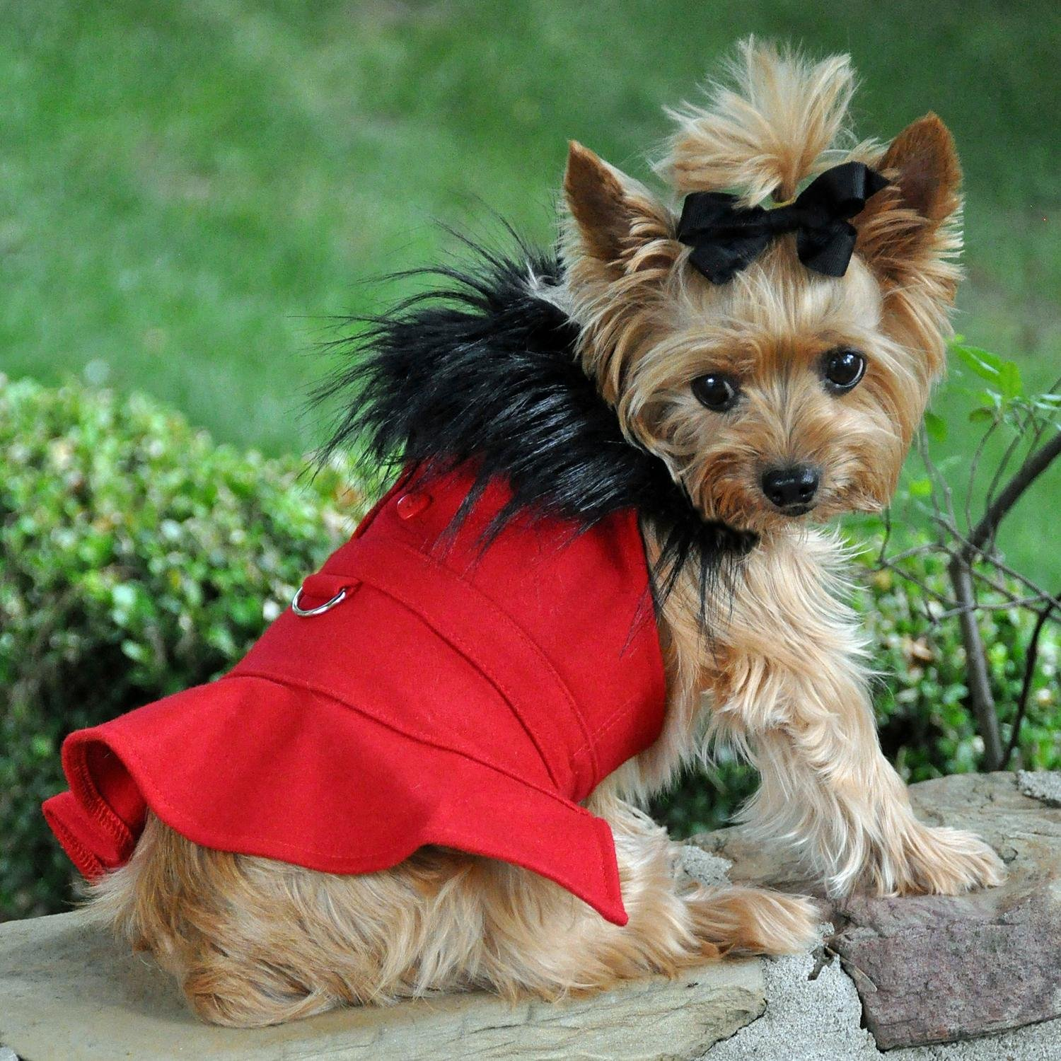 Red XL Red XL Doggie Design Wool Fur Trimmed Dog Harness Coat with Leash (XL, Red)