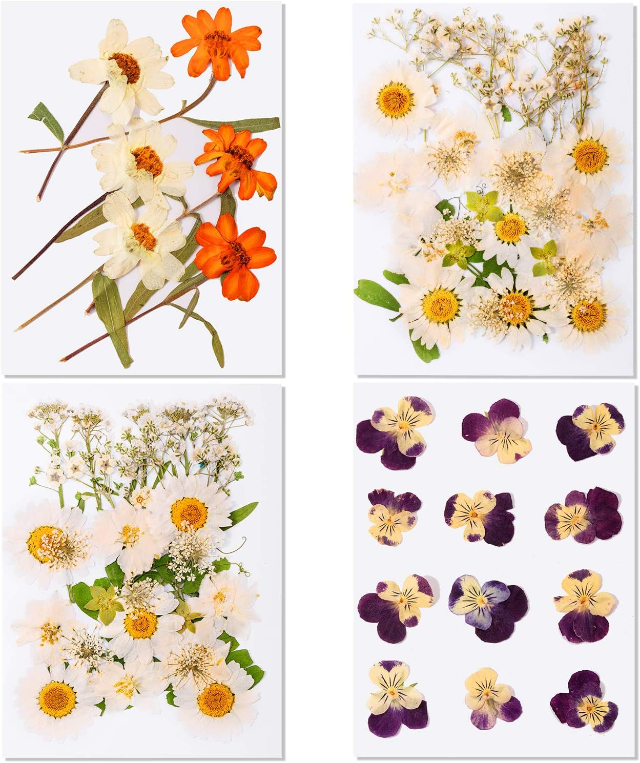 74 Pieces Real Dried Pressed Flowers Leaves Mixed Natural Dry Flowers with Tweezers for Scrapbooking DIY Candle Decoration Resin Jewelry Pendant Crafts Making