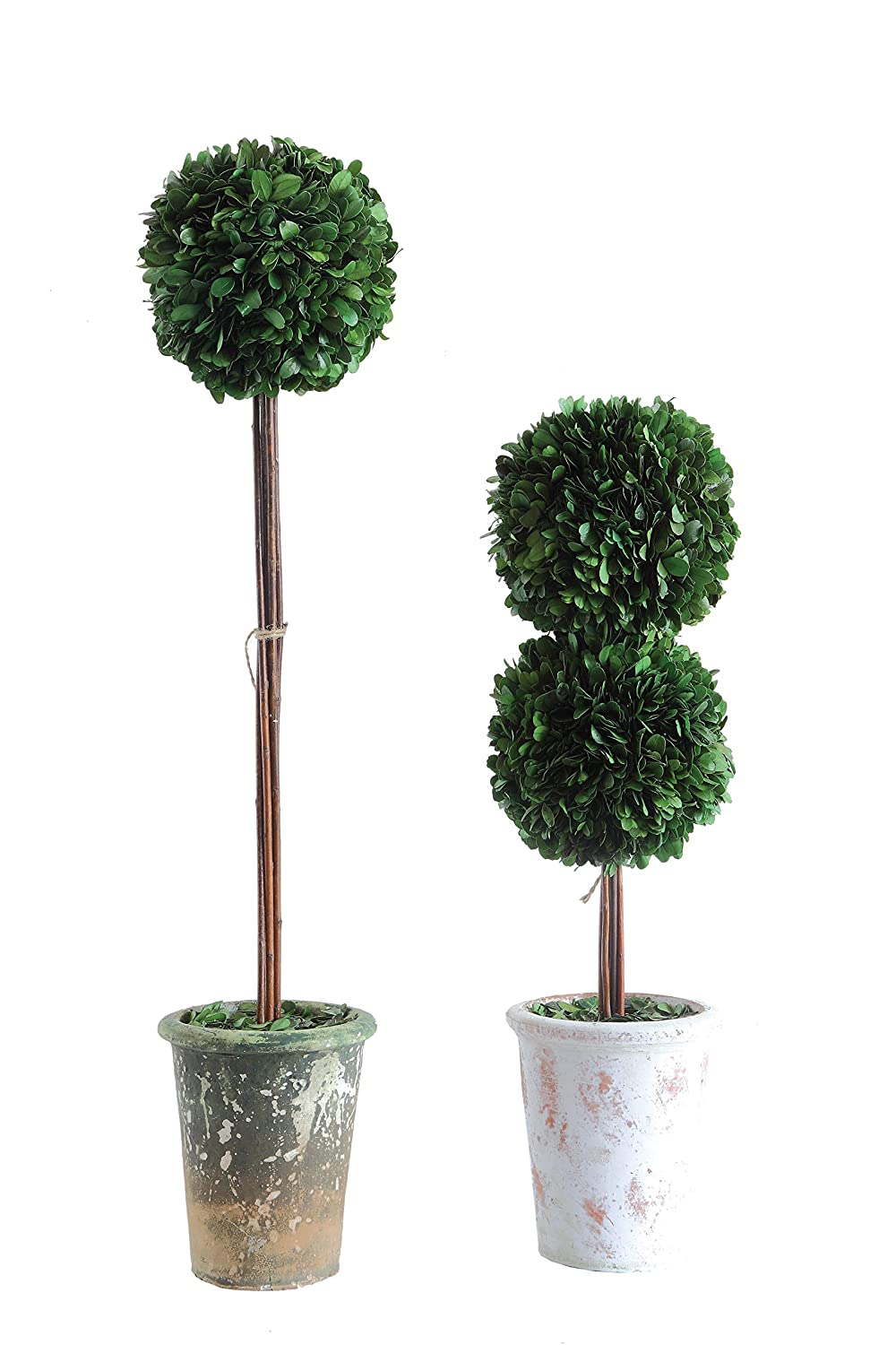 Boxwood topiaries in clay pots for European country and French farmhouse style spaces.