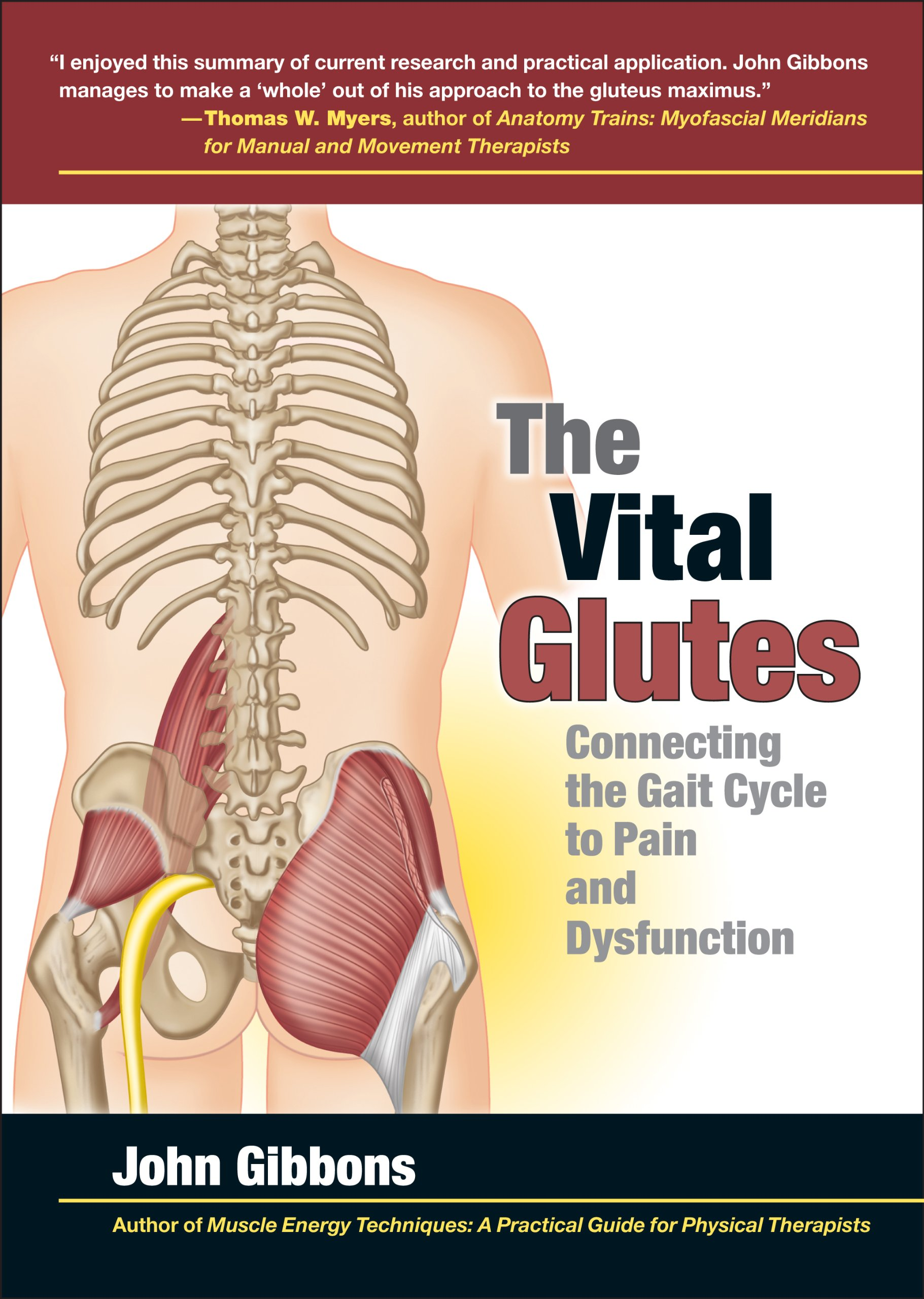 The Vital Glutes: Connecting the Gait Cycle to Pain and Dysfunction ...