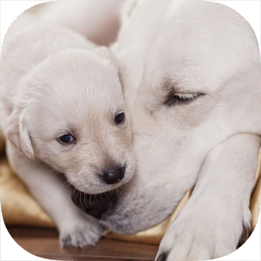 Used, Be a Professional Help a Mother Dog Birth Fast & Safe for sale  Delivered anywhere in USA