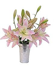 Stargazer Barn Blushing Bouquet Light Pink Royal Lilies with Vase