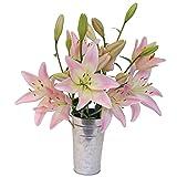 Stargazer Barn Blushing Bouquet Light Pink Royal