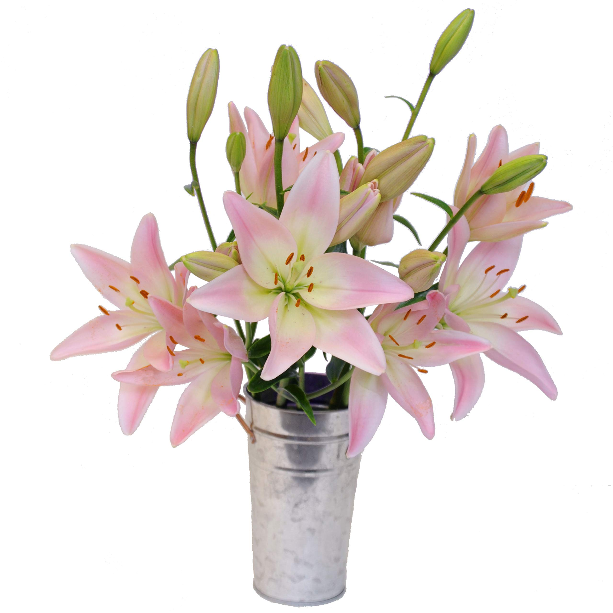Stargazer Barn Blushing Bouquet Light Pink Royal Lilies with Vase