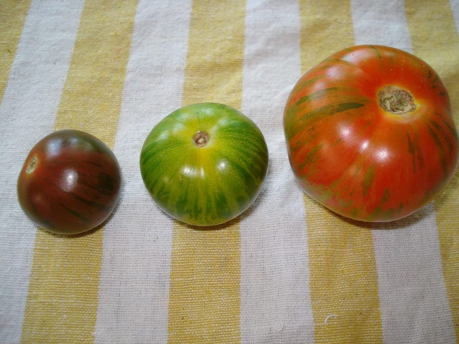 50 CHOCOLATE STRIPES TOMATO Brown with Green Lycopersicon Fruit Vegetable Seeds