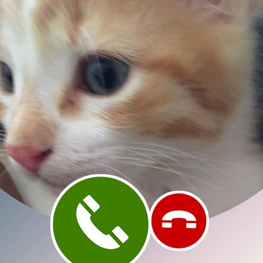 Fake Call from Valantino cat-Prank