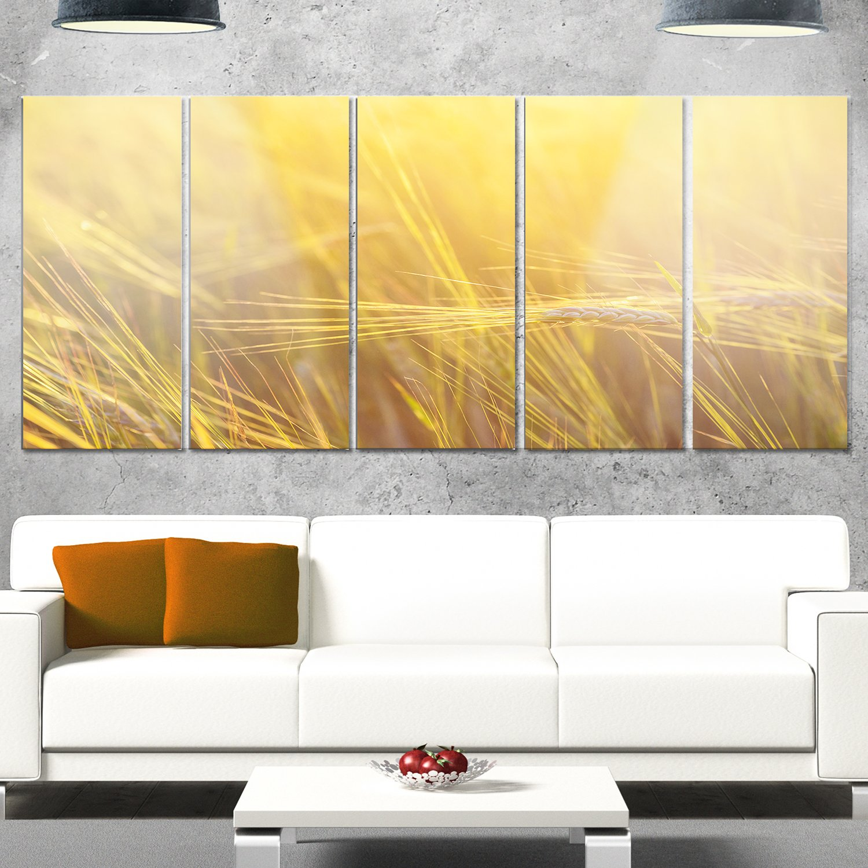 Amazon.com: Designart MT14077-401 Wheat Field Close-up at Sunset ...