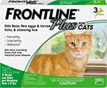 Dishes, Feeders & Fountains Isyoung Pet Fountain Premium Activated Carbon Filters 7 Ct Cat Supplies Hard Plastic Bottom Fancy Colours