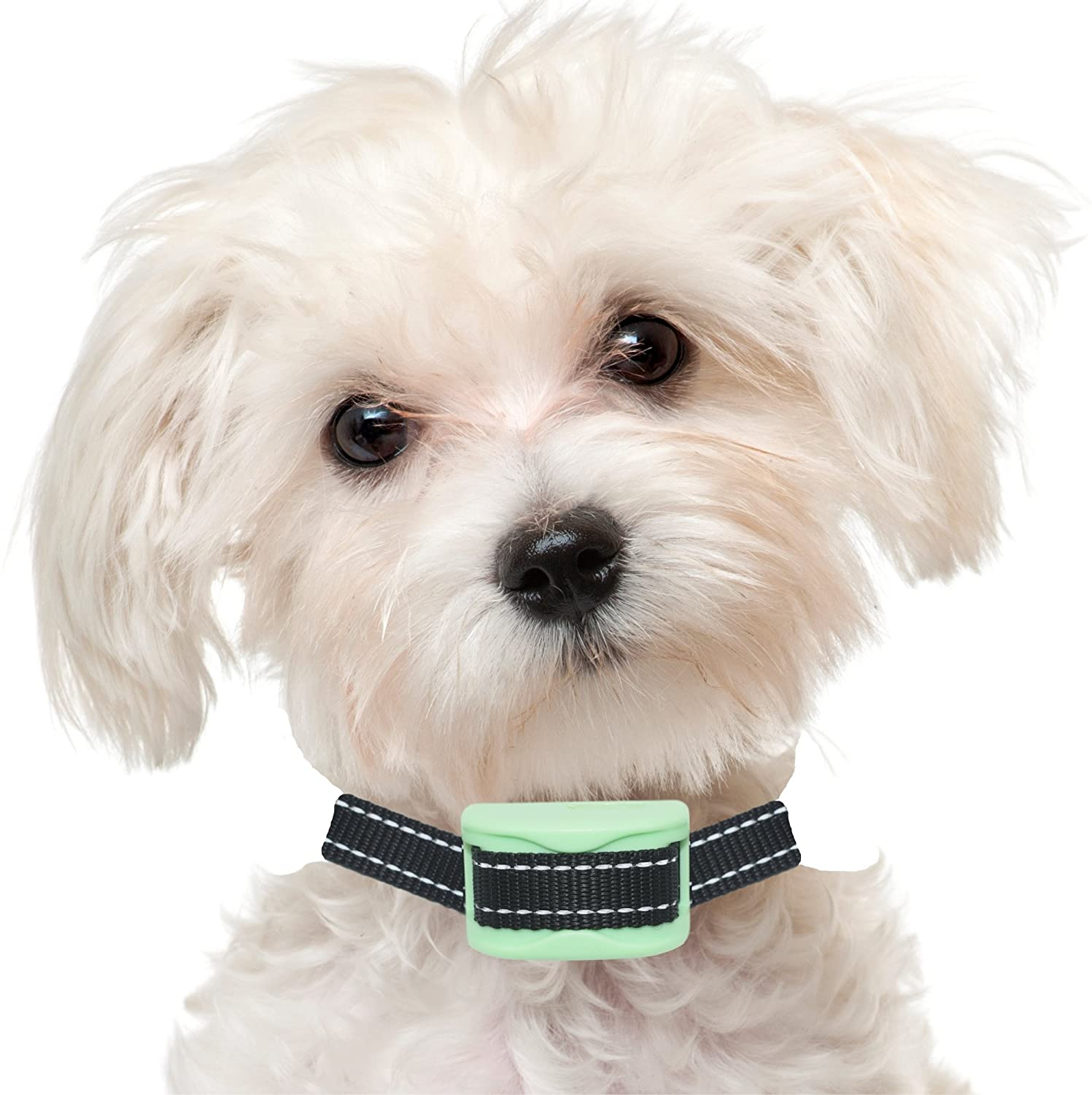 30 Off Our K9 Anti Bark Collar Sound And Vibration Pain