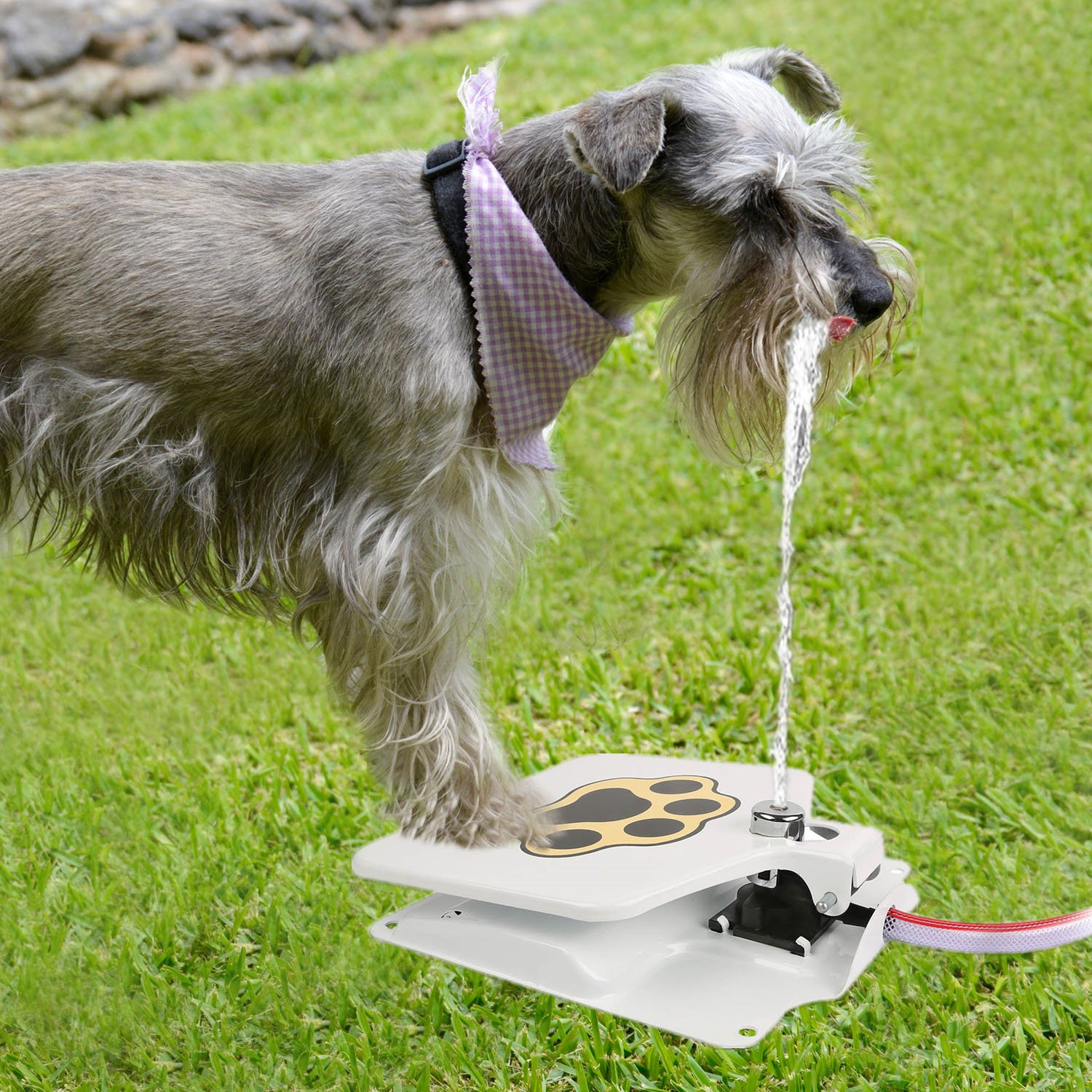 iMounTEK Hygienic Dog/Pet Geyser Water Fountain (41'' Hose, Prevents Your Pet From Drinking Stagnant Water, Paw Design, Durable Steel, Water Safe, Encourages Drinking)