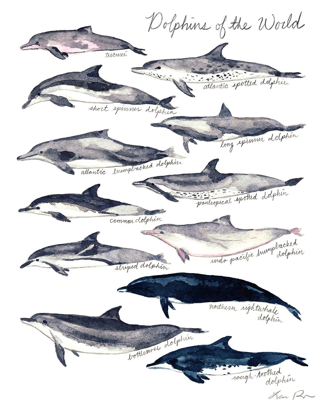 Dolphin Art Print Dolphin Painting Dolphin Wall Art Dolphin Watercolor  Nautical Decor Nautical Nursery Art Dolphin Decor Canvas Art Print Ocean  Wall