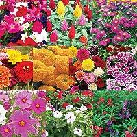 Pyramid Flower Seeds Bank For Home Garden 10 Varieties - 620 Seeds