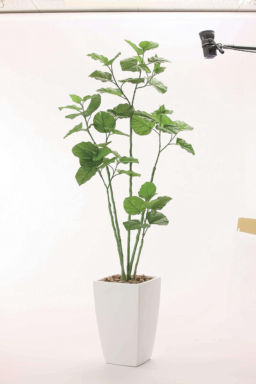 光触媒 アーバンブランチウンベラータ1.9m【人工観葉植物】 B077N3GR8N