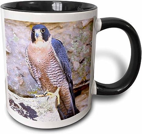 3drose Peregrine Falcon Bird Native To Us Na02 Dno0142 David Northcott Two Tone Mug 11 Oz Black White Kitchen Dining