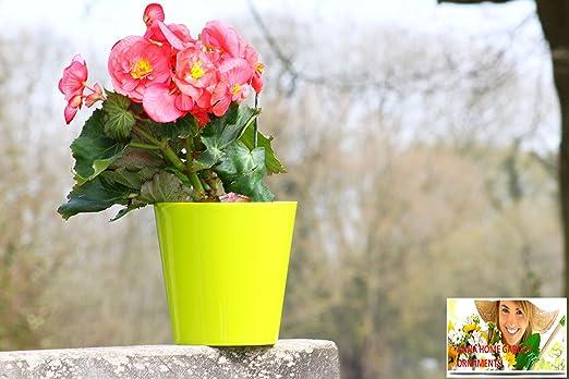 Macetas de plástico de alta calidad para flores, plástico, verde ...