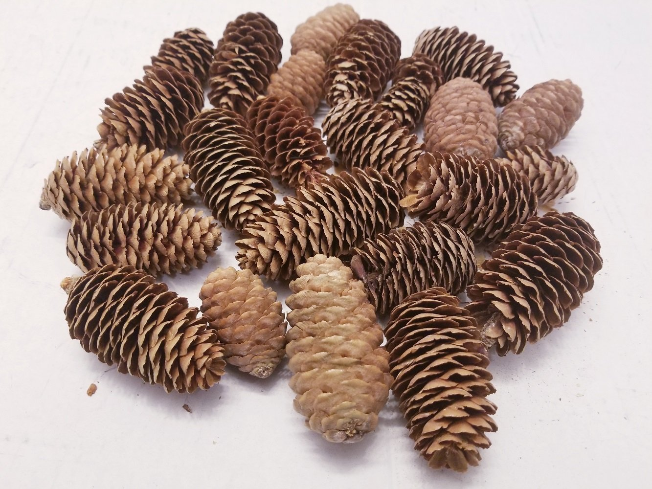 BCD Medium Pinecones - Bag Of 20-25 Medium Pinecones, Perfect For Crafting, Decorating Bowl Fillers