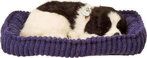 Border Collie - Pet Mate / Nap Breathing Life Like Sleeping Dog in Bed Sleeping Pet by Precious Petzzz: Amazon.com.mx: Juegos y juguetes