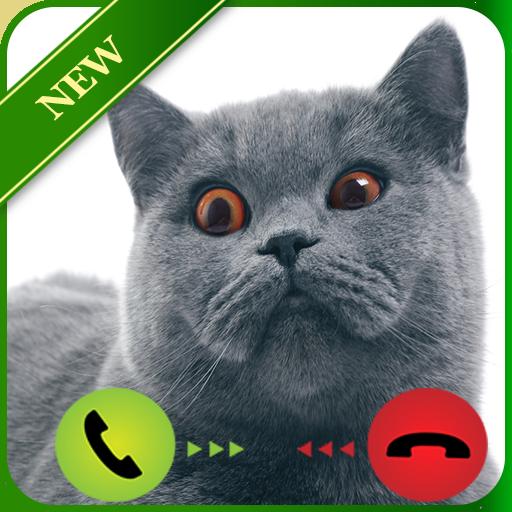 Talking Cat Calling