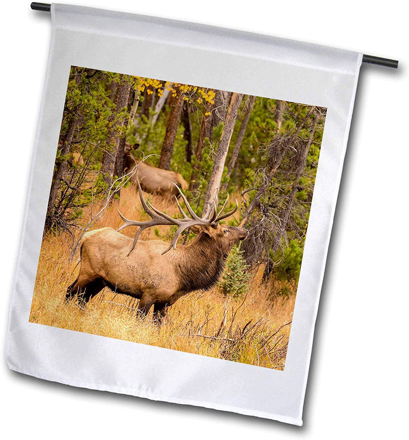 3dRose Danita Delimont - Elk - USA, Colorado, Rocky Mountain National Park. Male elk About to Bugle. - 12 x 18 inch Garden Flag (fl_314739_1)
