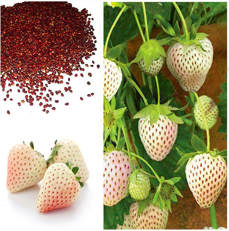 Amazon.com : White Alpine Strawberry Fragarias Vesca Pineberry 200 Seeds  Fragaria Seeds : Garden & Outdoor