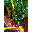 Swiss Chard Seeds- Heirloom Rainbow Mix- 100+ Seeds by Ohio Heirloom Seeds