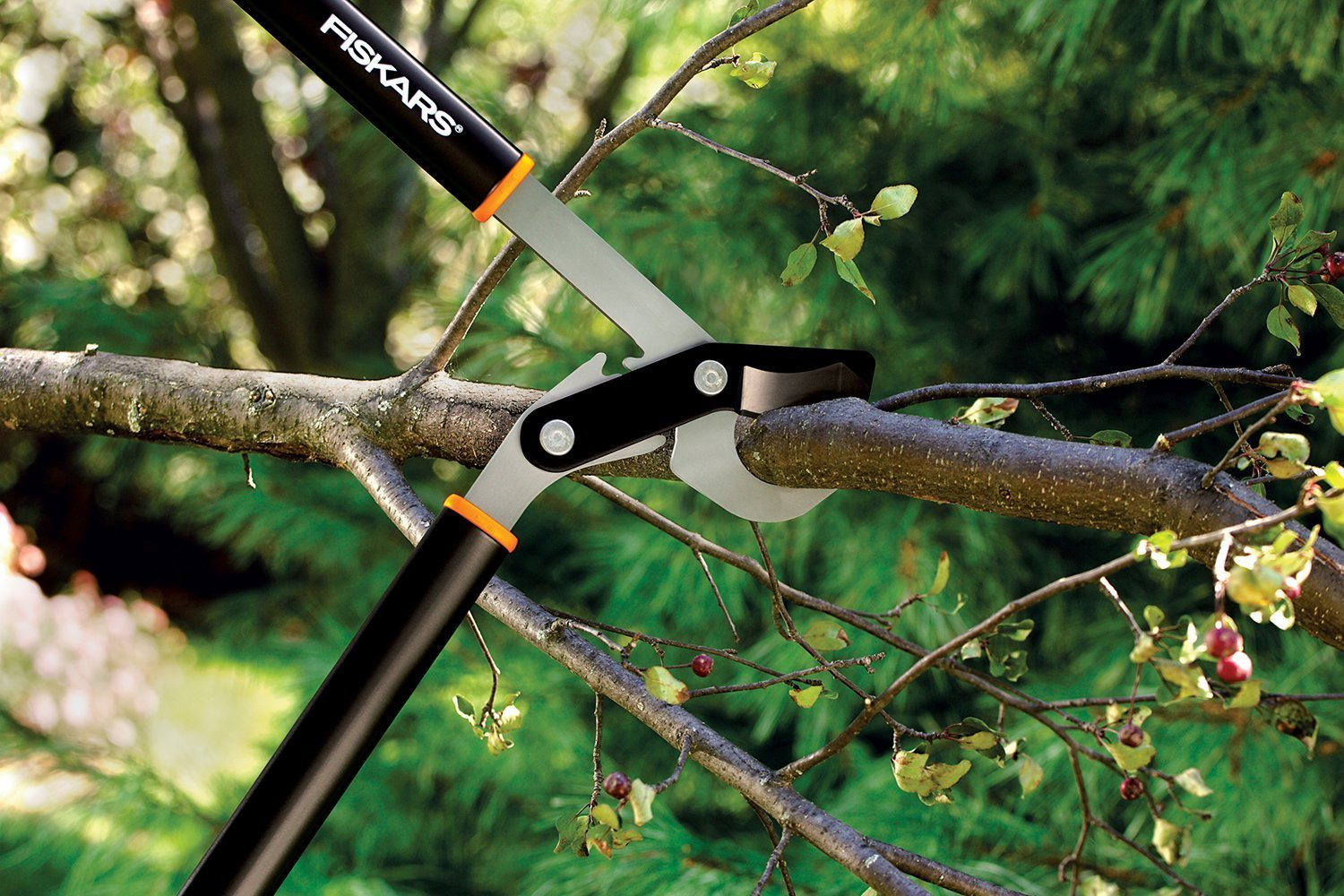 6 Of The Best Loppers Tried Amp Tested Pruning
