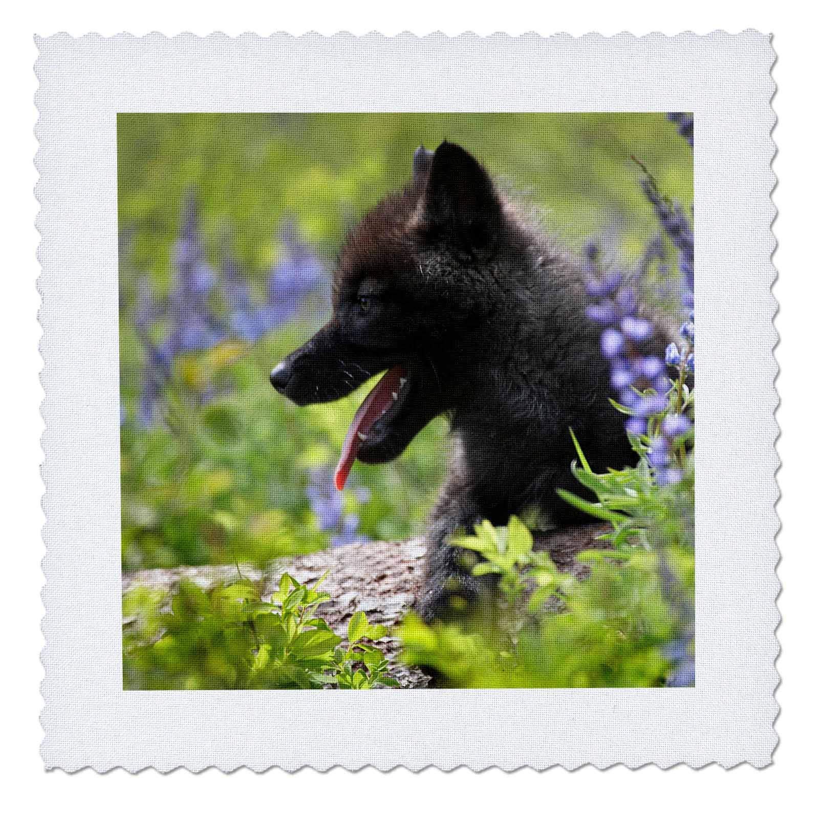 3dRose Danita Delimont - Baby Animals - Dark Gray wolf, Canis lupus, pup in wildflowers, Montana - 18x18 inch quilt square (qs_259644_7)