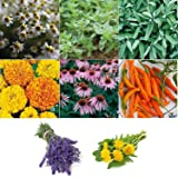 David's Garden Seeds Collection Set Herb Medicinal 8 Varieties (Multi) 1900 Non-GMO, Open Pollinated Seeds