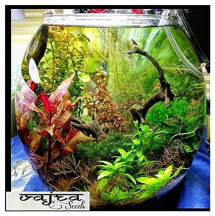 DCS 20 Aquarium Grass Seeds Water Grasses Random Aquatic Plants Tank