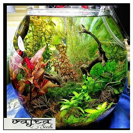 Aquarium Colourfull Plants & Random Aquatic Water Grass Mixed 150+ Seeds Packet