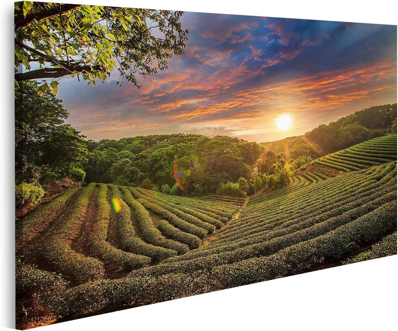 Bild auf Leinwand Sonnenuntergang im Weinberg Wandbild Poster Leinwand