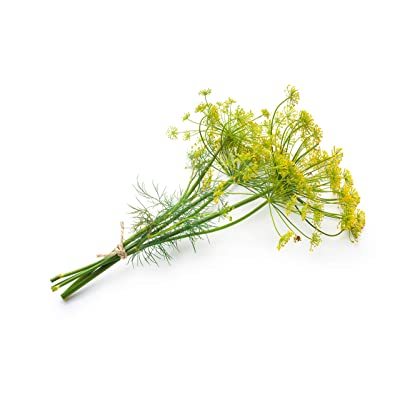 Bouquet Dill Herb Seeds - Non-GMO - 1.5 Grams, Approximately 900 Seeds : Dill Plants : Garden & Outdoor