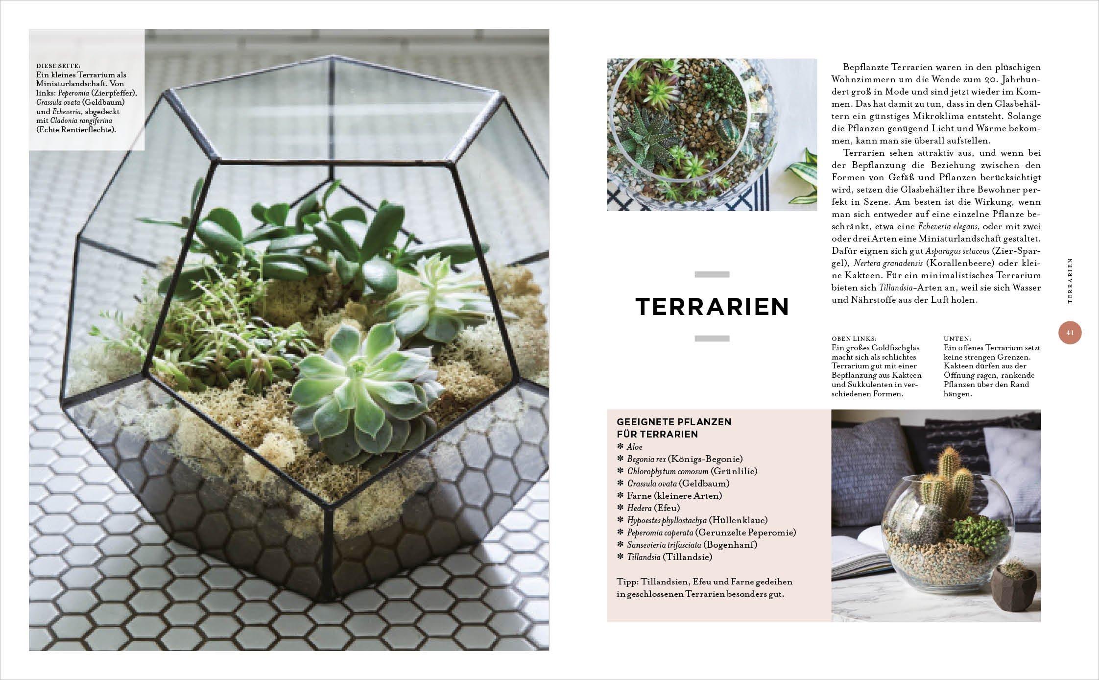 Zimmer mit Pflanze: Kreative Wohn-Ideen & praktische Tipps: Amazon ...