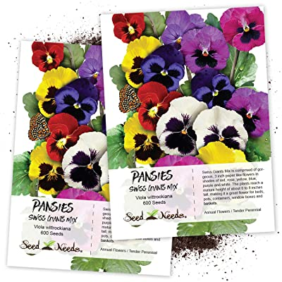 Seed Needs, Swiss Giants Pansy (Viola wittrockiana) Twin Pack of 600 Seeds Each : Garden & Outdoor