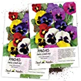 Seed Needs, Swiss Giants Pansy (Viola wittrockiana) Twin Pack of 600 Seeds Each
