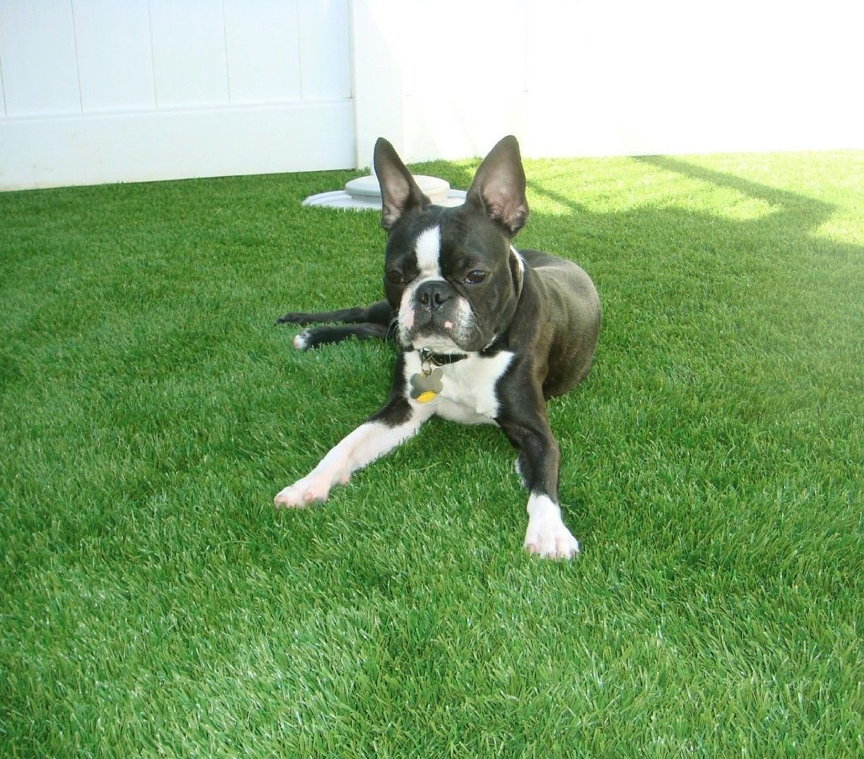 Artificial lawn Premium Synthetic Turf Fake Grass Indoor Outdoor Landscape Pet Dog Area, More Than 30 (3.3' x 5')