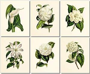 Flower Wall Art - Vintage Floral Decor (Set of 6) - 8x10 - Unframed - Botanical Prints - White