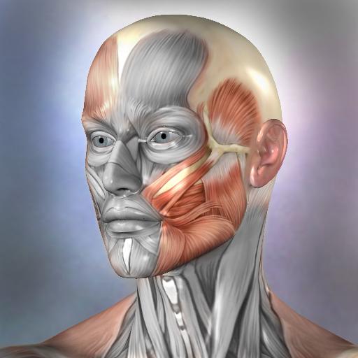 Muscle and bone anatomy
