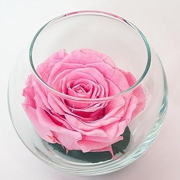 62db47b03567 Amazon.com   Luxe Bloom Single Lasting Luxury Rose - Rosa   Grocery ...